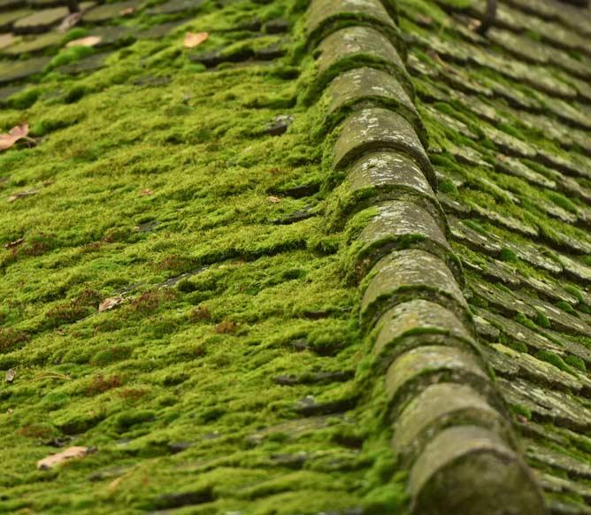 Nettoyage de toiture ou démoussage de toiture autour de Ploërmel